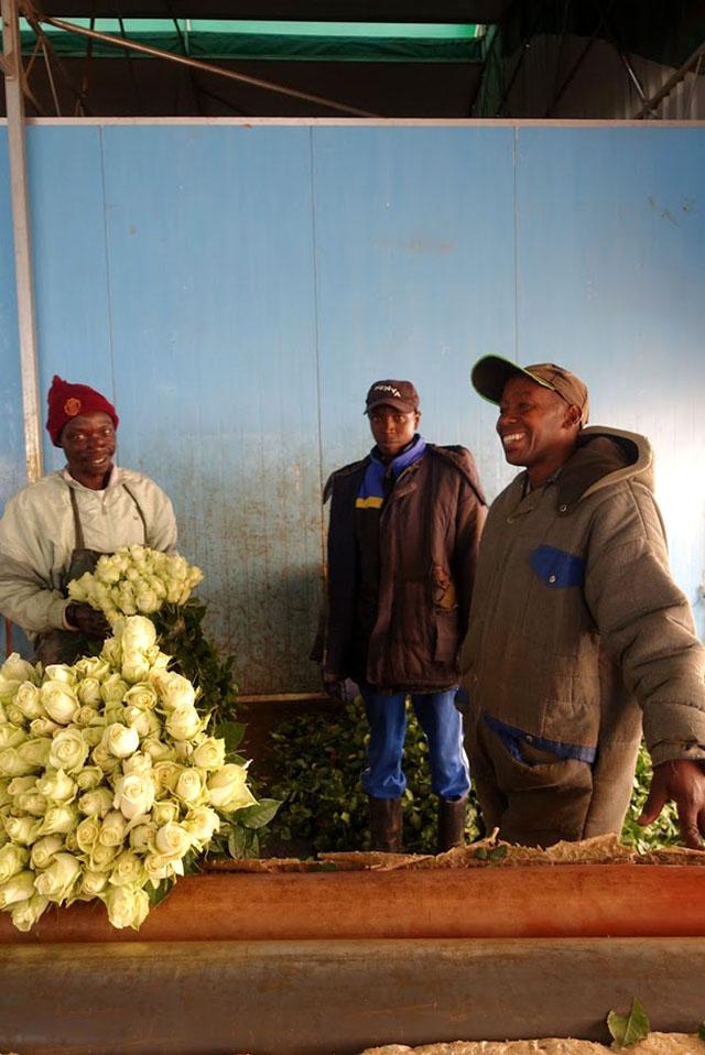 世界の花屋 ケニアのバラ農園から