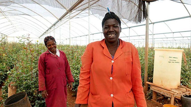 ケニアのバラ農園から