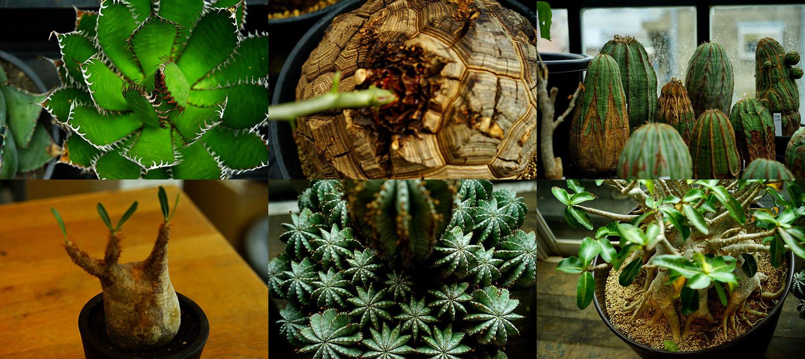 南アフリカからきた塊根植物を、前田有紀が取材しました!