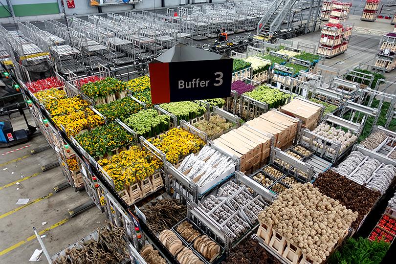 世界最大の花市場、オランダ・アールスメール花市場
