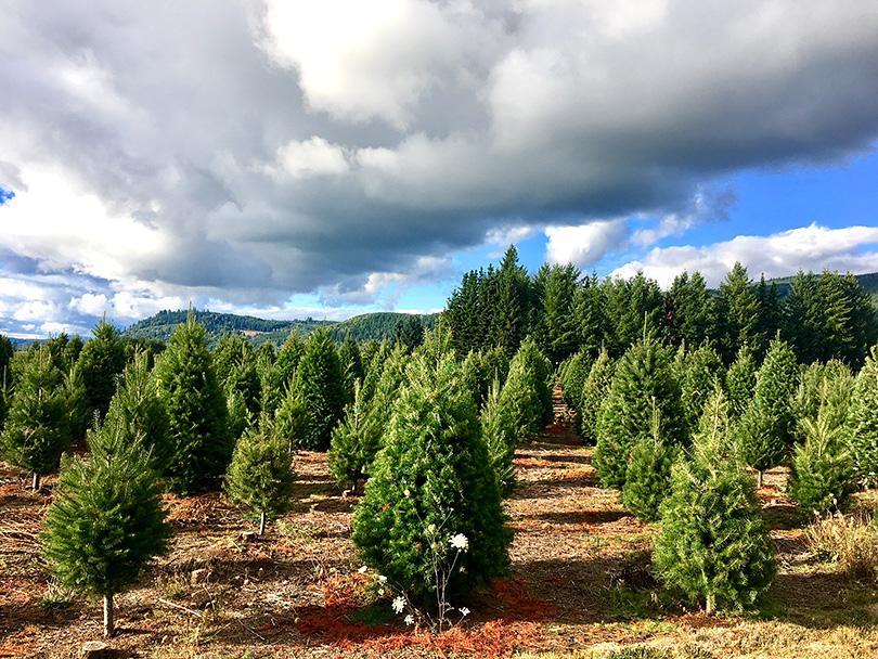クリスマスのふるさと~アメリカ・シアトル~