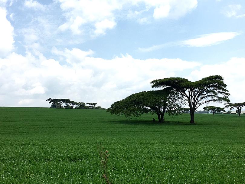 ソジャンミ農園のゲストハウスから~ケニア・ナクル~