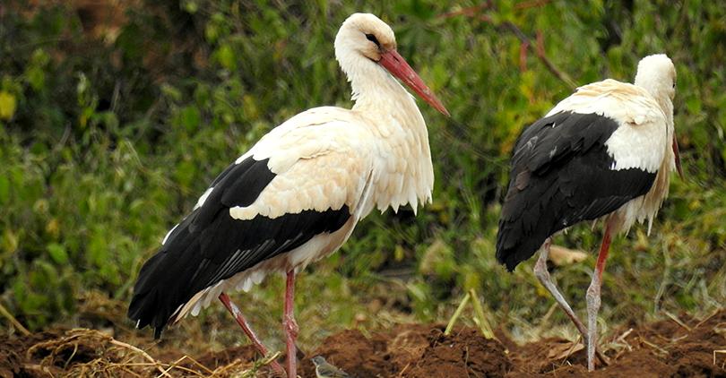 鳥が大好き!ケタンさんのソジャンミ農園の日々Vol.5