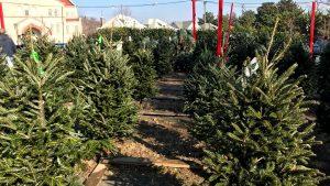 アメリカの12月〜クリスマスツリーが我が家にやってきたVol.1