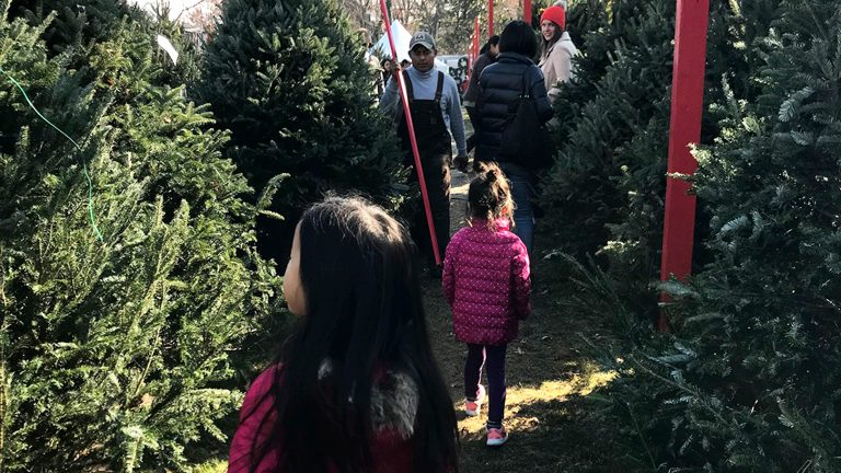 アメリカの12月〜クリスマスツリーが我が家にやってきたVol.2
