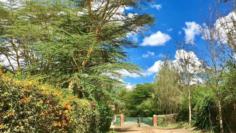 世界一の並木道~ケニア・ナイバシャ~