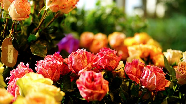 12月、世界の花屋に出会える場所