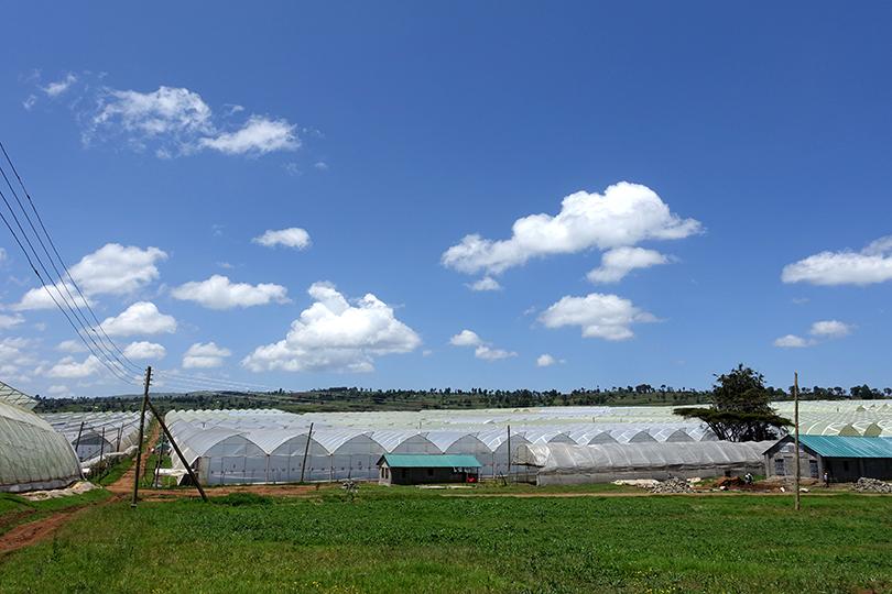 ケニア・ソジャンミ農園のワークショップレポート