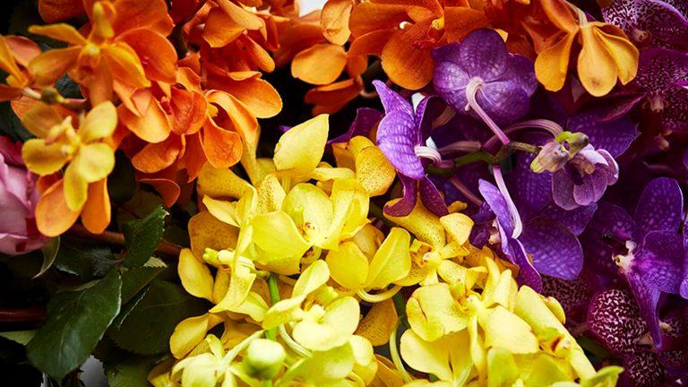 【3月限定企画】 卒業シーズンに贈る、タイの幸せを願う花
