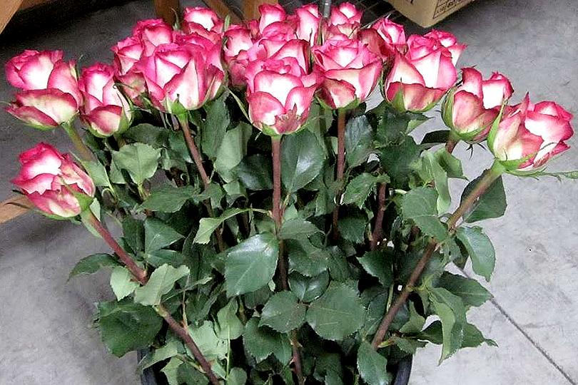 世界の花屋のなかのことVol.5 あなたの周りにも花や緑を!