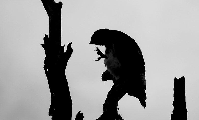 鳥が大好き!ケタンさんのソジャンミ農園の日々Vol.8