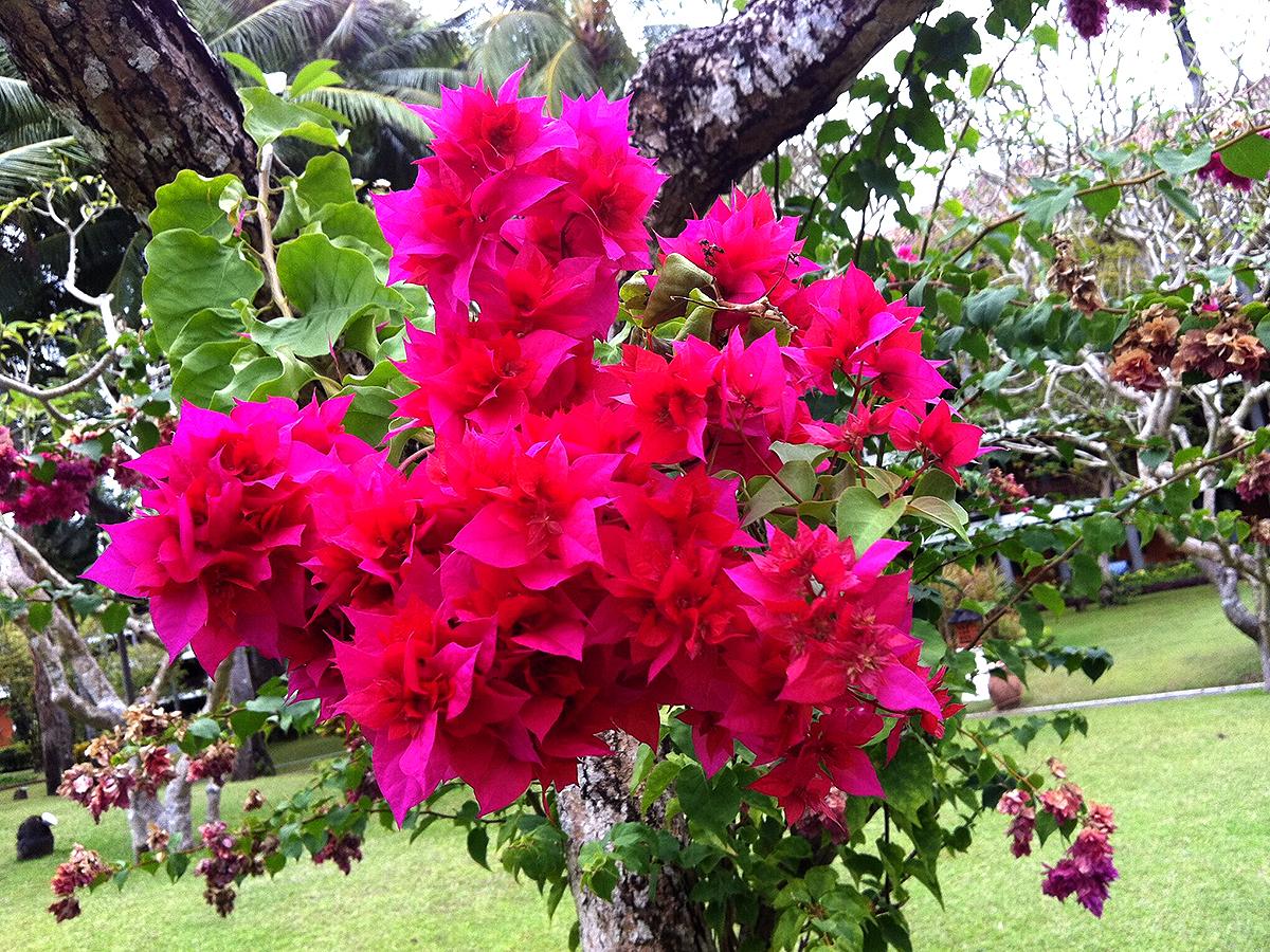 KRAS × 世界の花屋「農園の草花×星降る島のビンタンバスケット」