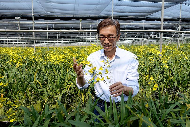 世界の花屋のなかのことVol.7 台湾から届く、洪さんのオンシジウム