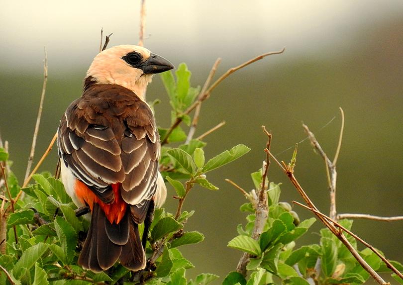 鳥が大好き!ケタンさんのソジャンミ農園の日々Vol.9
