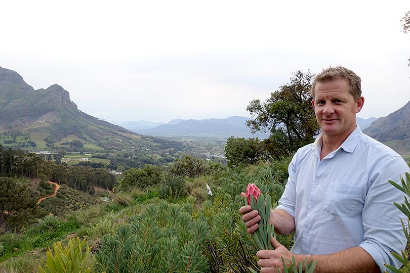 「花の王様 キングプロテア」 南アフリカ花だより Vol.1