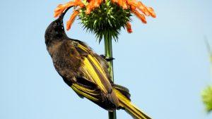 鳥が大好き!ケタンさんのソジャンミ農園の日々Vol.10