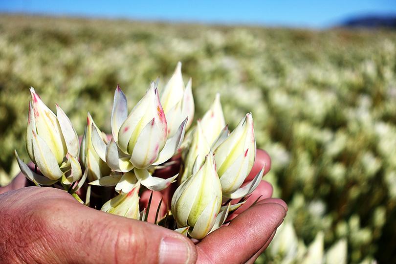 南アフリカのセルリア農家、ヘンドリックさん