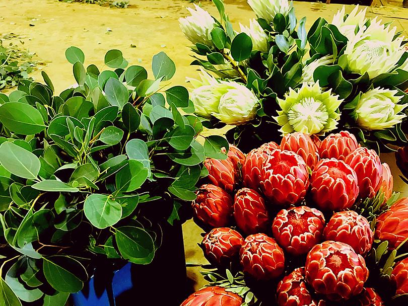 南アフリカの珍しい花