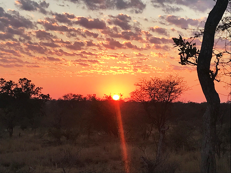 ブライアンさんの南アフリカ花便り Vol.3