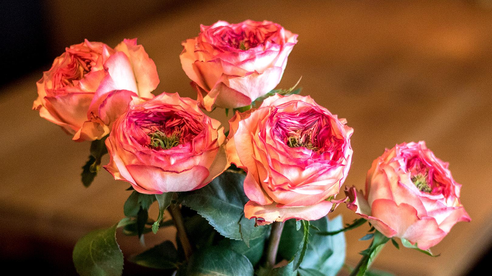 ソジャンミ農園のバラ(スタートレック)