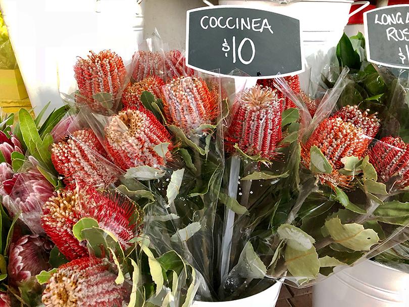 西オーストラリアのお花屋さんへ~オーストラリア・パース~