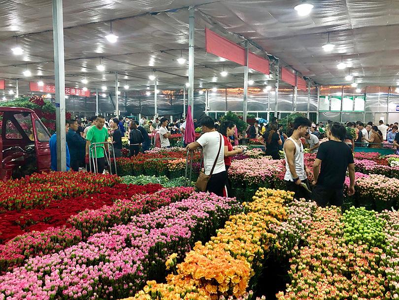 アジア最大の花市場へ~中国・昆明~