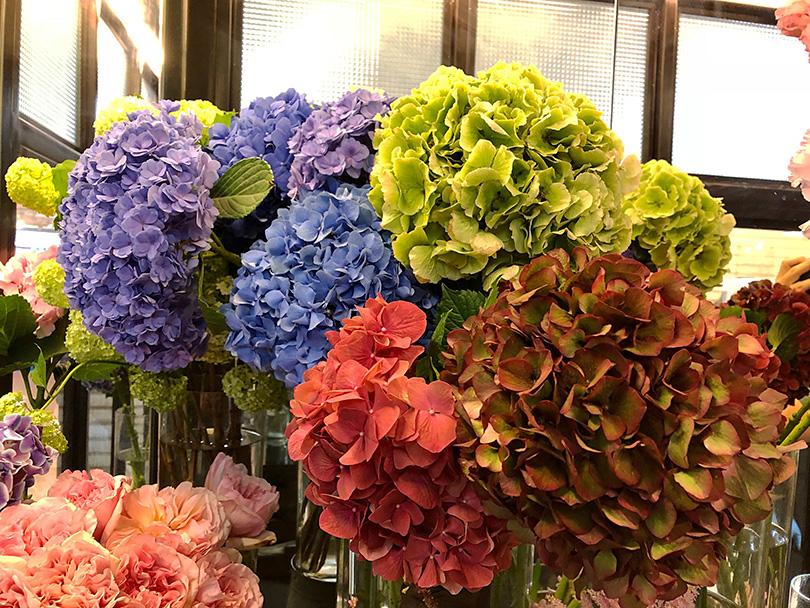 色使いが印象的な花文化~香港 ~