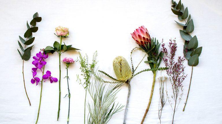 定期便:【世界の花のある暮らし】 がスタートしました!