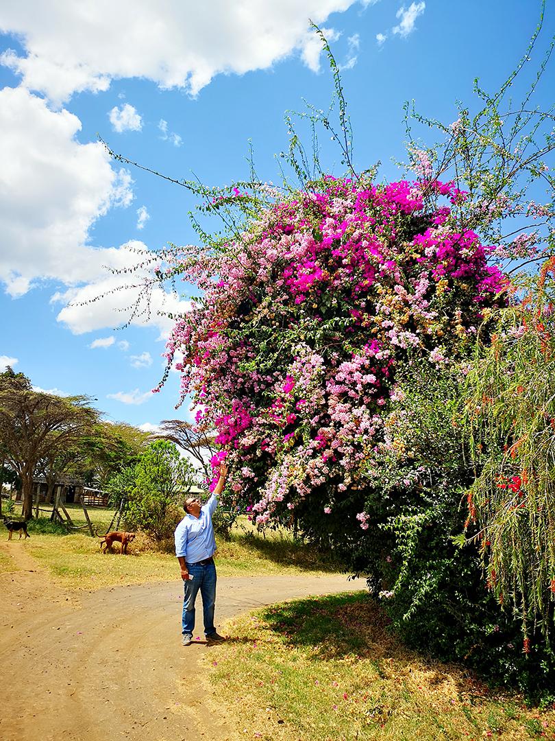 「バレンタインシーズンに人気の花」ケニアのバラ農園の日々Vol.16