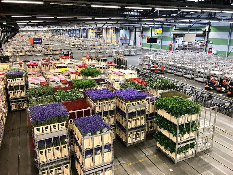 世界最大の花市場~オランダ・アムステルダム~