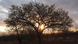 マルラツリーを求めて~南アフリカ・ツァニーン~