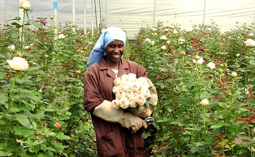 「母の日inソジャンミ農園」ケニアのバラ農園の日々Vol.19