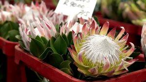 アフリカ最大の花市場~南アフリカ・ヨハネスブルグ~